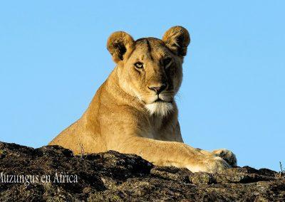Leona | Reserva Natural de Masai Mara, Kenia (20 de junio de 2016) | © Juan Pablo Guevara