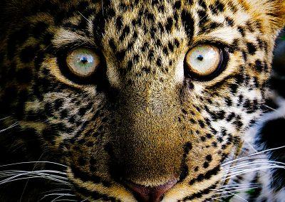 Cachorro de leopardo | Reserva Natural de Masai Mara, Kenia (02 de agosto de 2014) | © Juan-Pablo Guevara