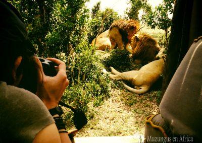 Loreto fotografía gatos en Kenia | Reserva Natural de Masái Mara, Kenia (02 de agosto de 2014) | © Juan-Pablo Guevara